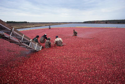 Image for cranberry
