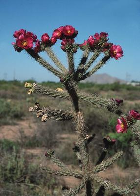 The gallery for --> Thar Desert Plants