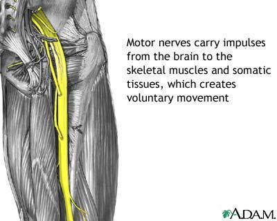 Nerves Define Nerves At