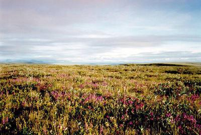 Tundra | Define Tundra at Dictionary.com